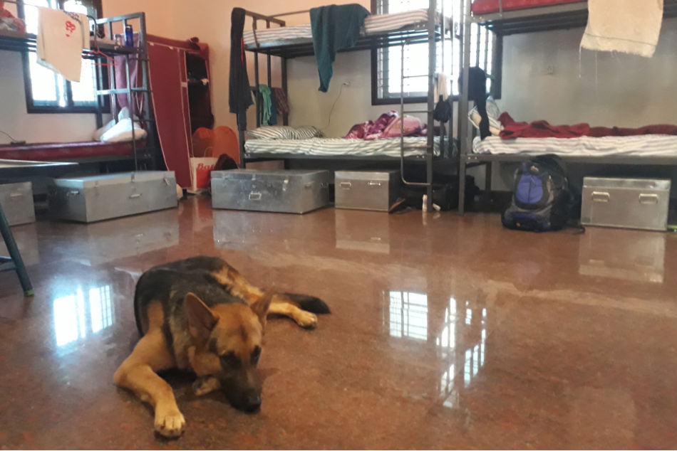 Max, a German Shepherd, rests at the Rebels FC Football Academy's dorm in Kommaghatta