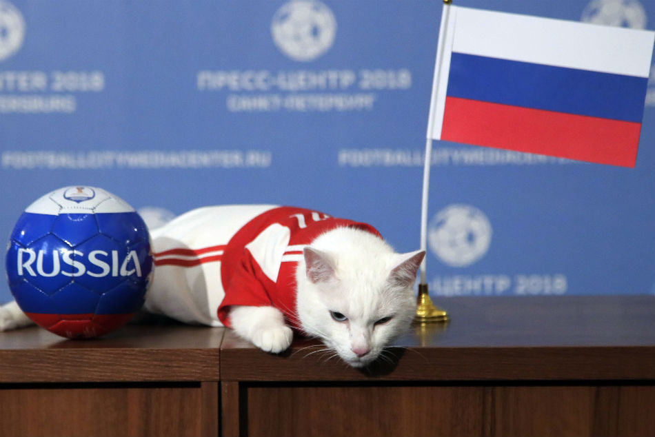 Achilles the cat, predicts the winner of the opening match.