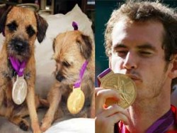 Andy Murray Precious Olympic Medals Rest With His Dogs