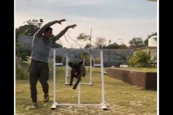 Ms Dhoni Posts Another Video Training His Dog Watch Video