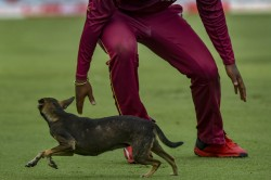 India Vs West Indies 1st Odi Stray Dog Invades The Pitch At Chepauk